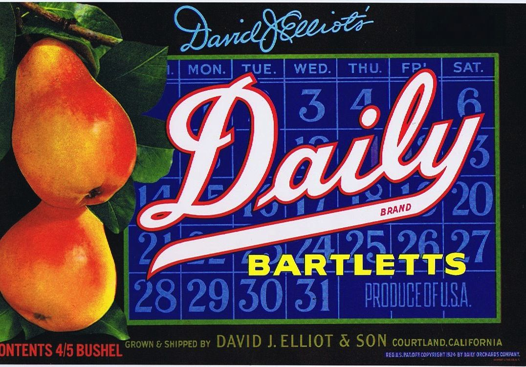 David Elliot's, Daily Brand Bartletts.  Grown and shipped by: David J. Elliot & Son, Courtland, CA.  Copyright 1924 by Daily Orchards Company.  Ephemeritor.com