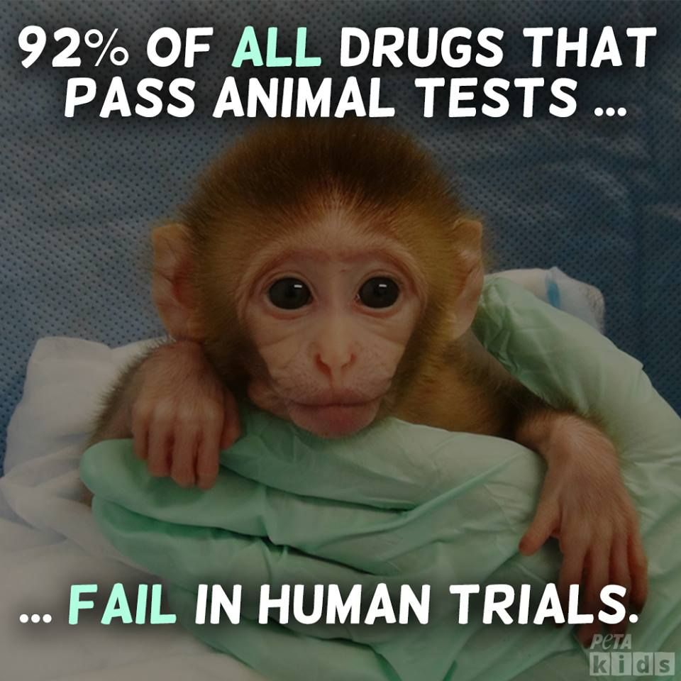 Animal Cruelty Quotes Making Kind Choices Animal Testing  Animal Cruelty Free And