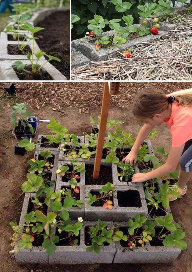 DIY Saving Space Ideas for Growing Strawberries