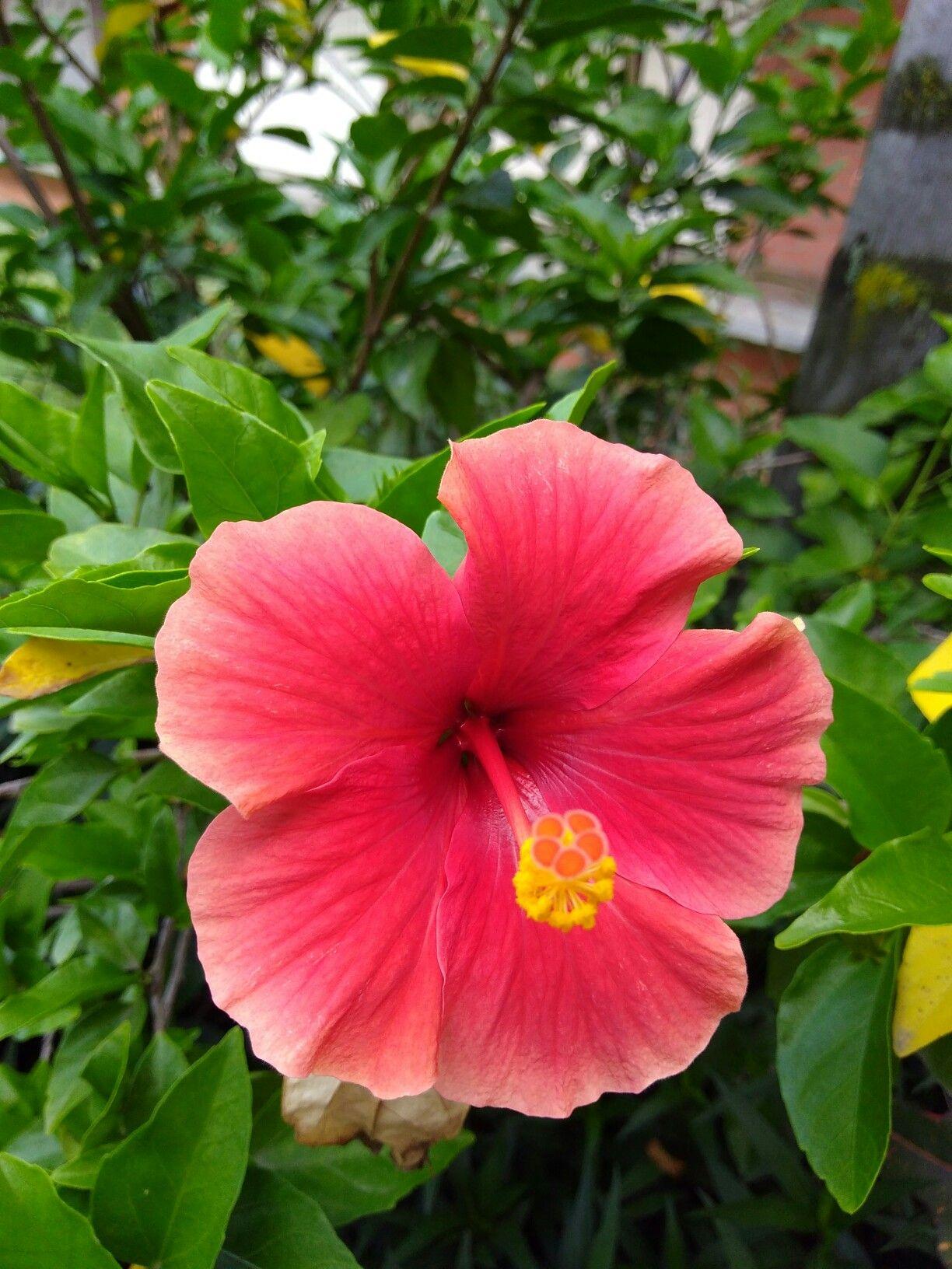 Belleza naturaleza pureza flowers pinterest flower tree belleza naturaleza pureza flower treebeautiful izmirmasajfo