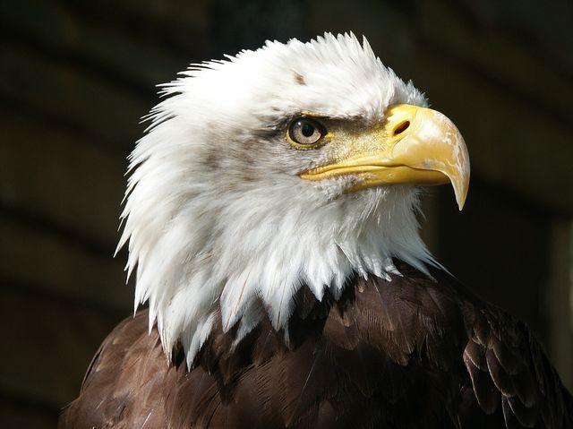 """Obtuve:""""Tienes una visión de águila. ¡Es imposible confundirte!"""" (9 De 11! ) - Y tú, ¿qué tan observador eres?"""