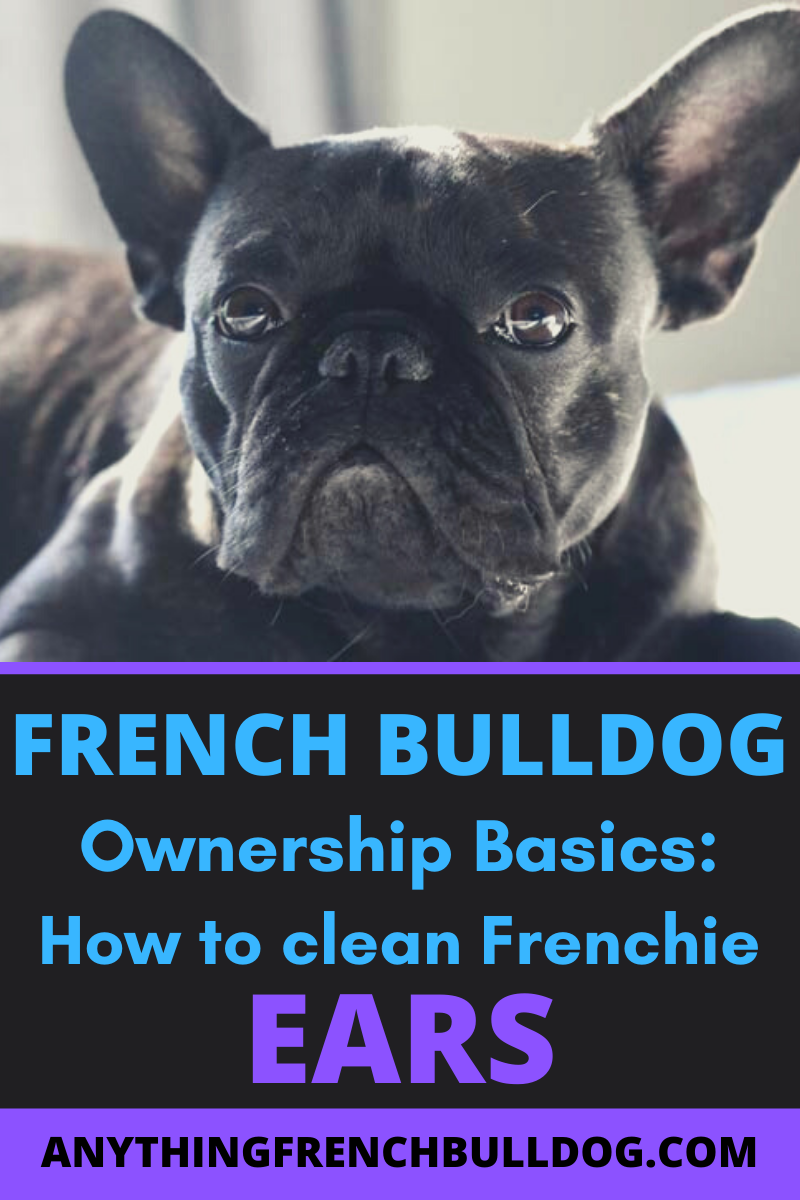 French Bulldog Ownership Basics How To Clean Frenchie Ears In 2020 With Images French Bulldog Bulldog