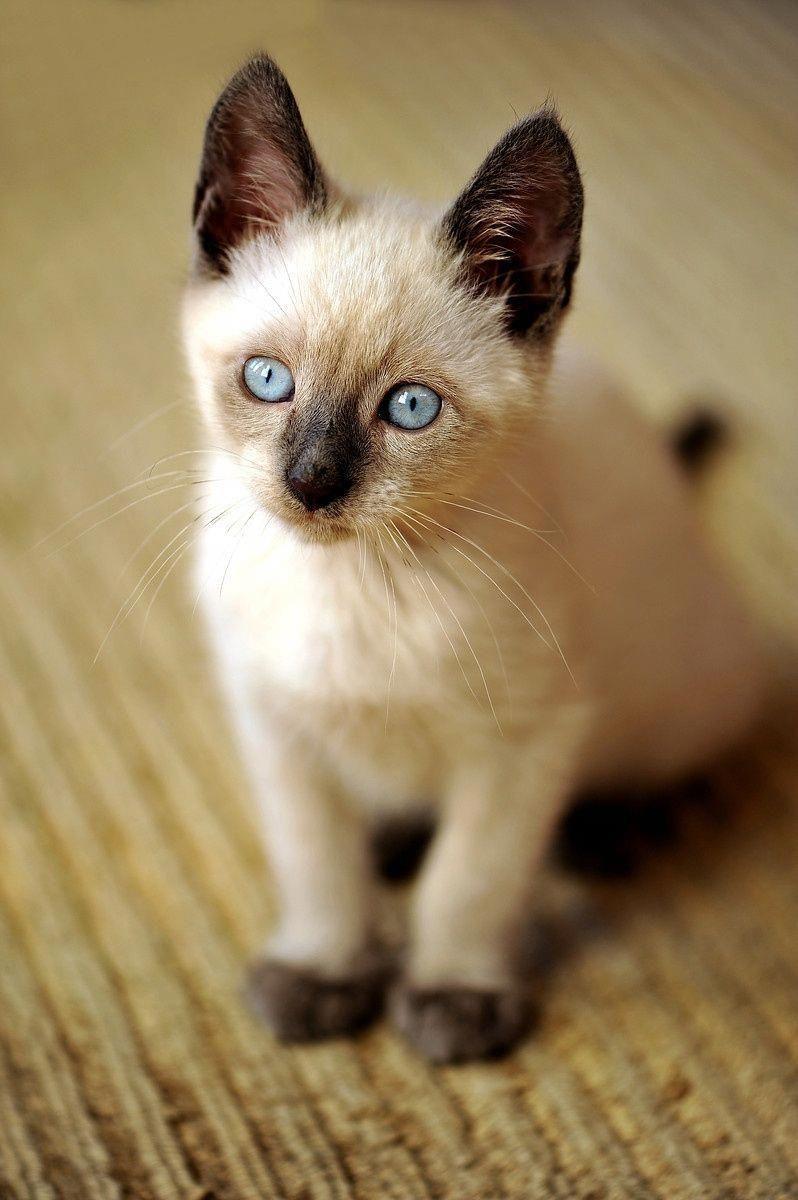 Cats Photos Catsinanimatedfilms Beautiful Cats Kittens Cutest