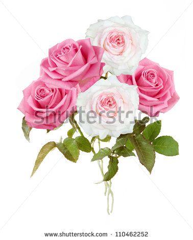 Flores Rosas Fotos, imagens e fotografias Stock | Shutterstock