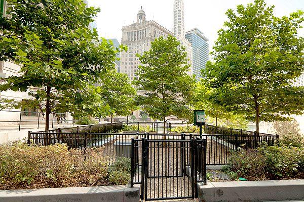 X Dog Park Chicago 84595207 Urban Dog Dog Park Apartment Pet