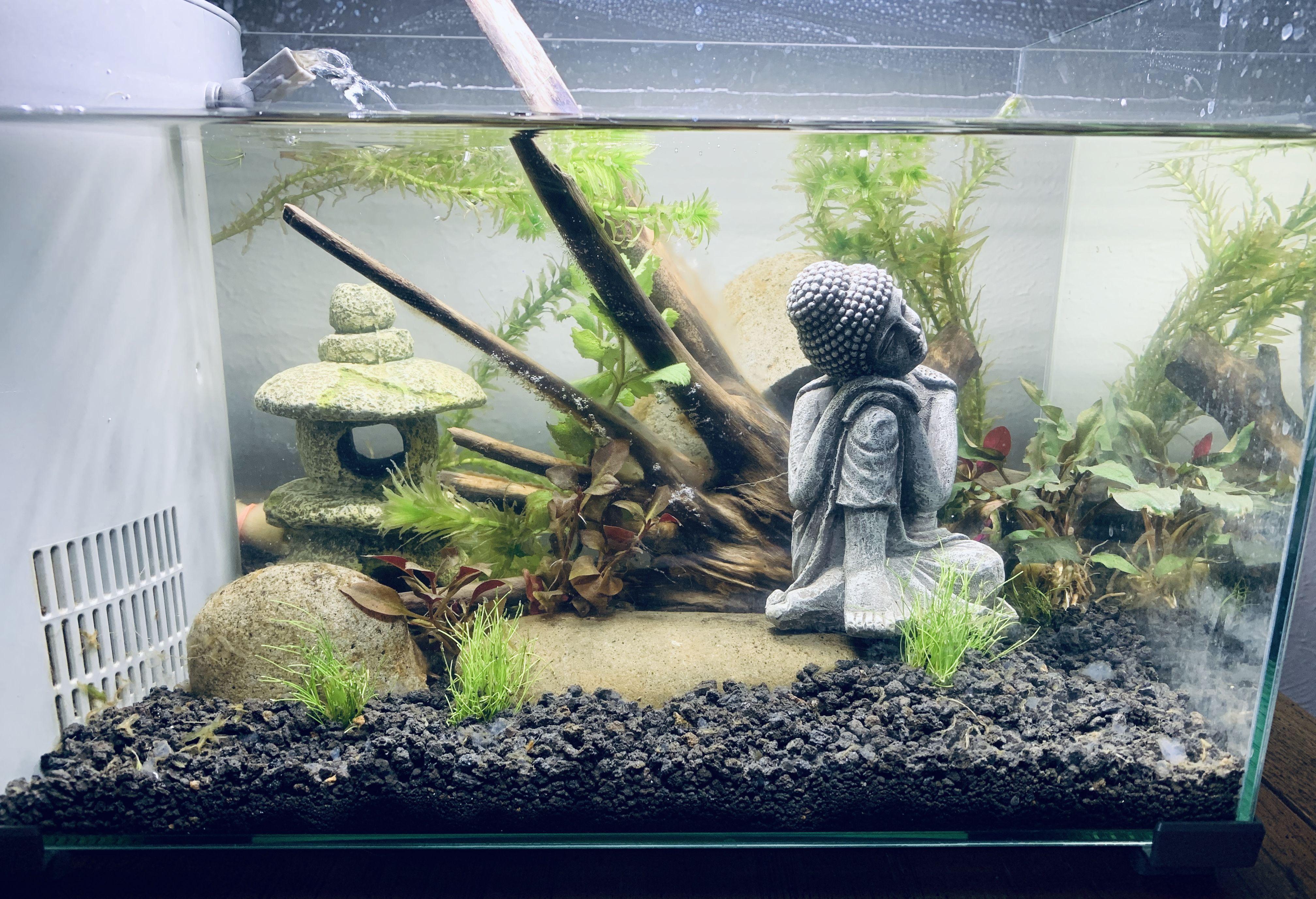Aquascape | Aquascape, Aquascape aquarium, Shrimp tank