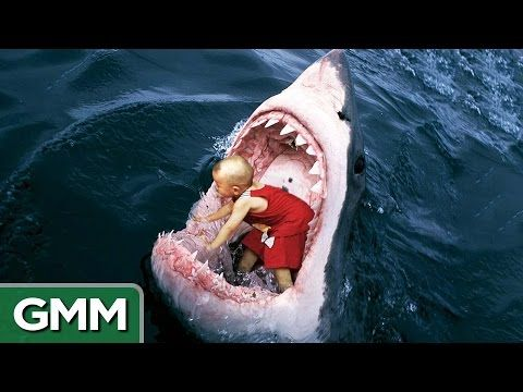 GREAT WHITE SHARK ATTACKS Caught On Tape - Wildlife Documentary - A predator or just ...