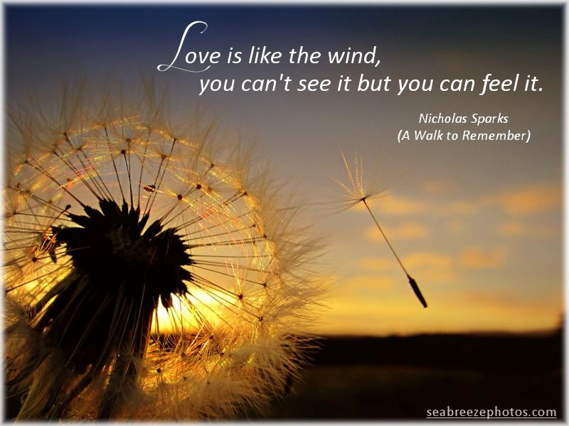 Image result for love is like the wind you can't see it but you can feel it