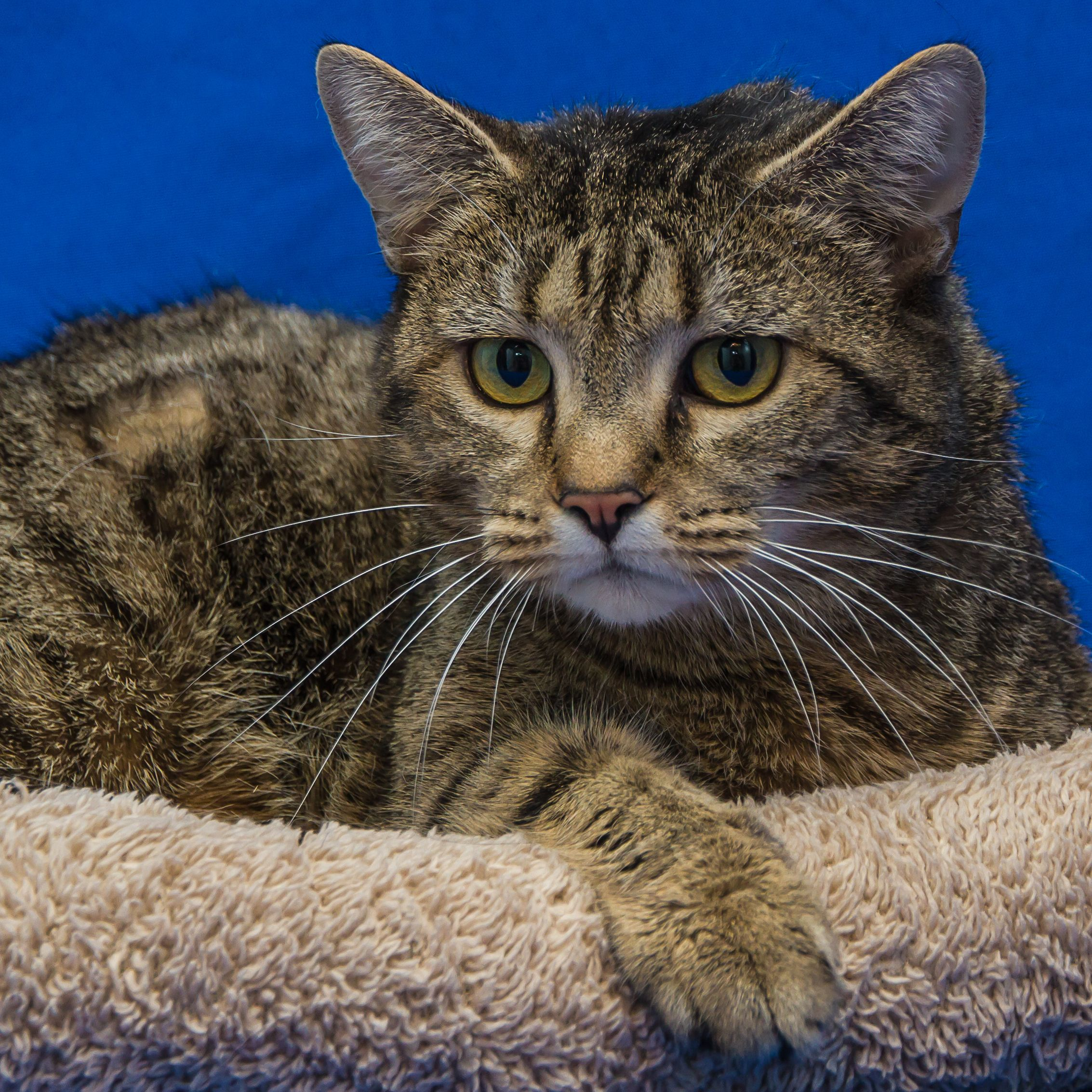 Sylvie Found Her New Foreverhome On 3 31 14 Animals Humane Society Feline