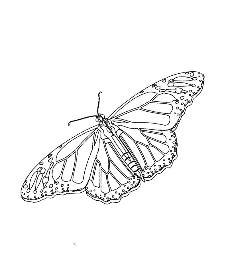 Monarch Butterfly Unique And Is Cool Coloring Page Kids