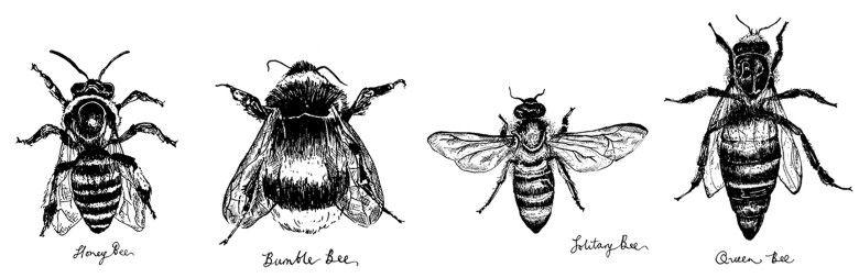 Emma Smiths bee desing