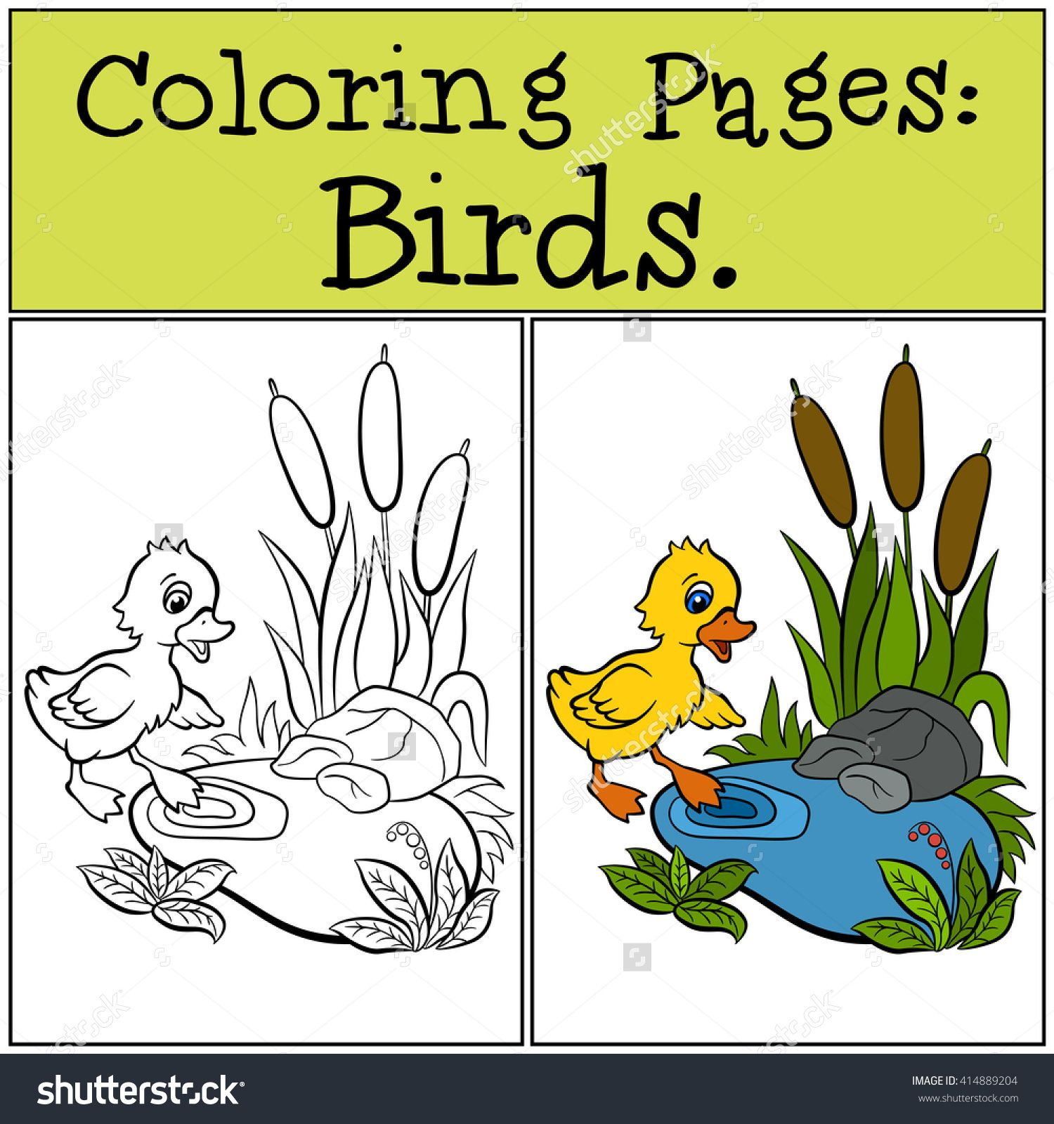coloring pages birds little cute duckling near the pond