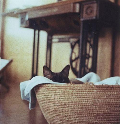 photo: akanée o;no  (Tumblr)