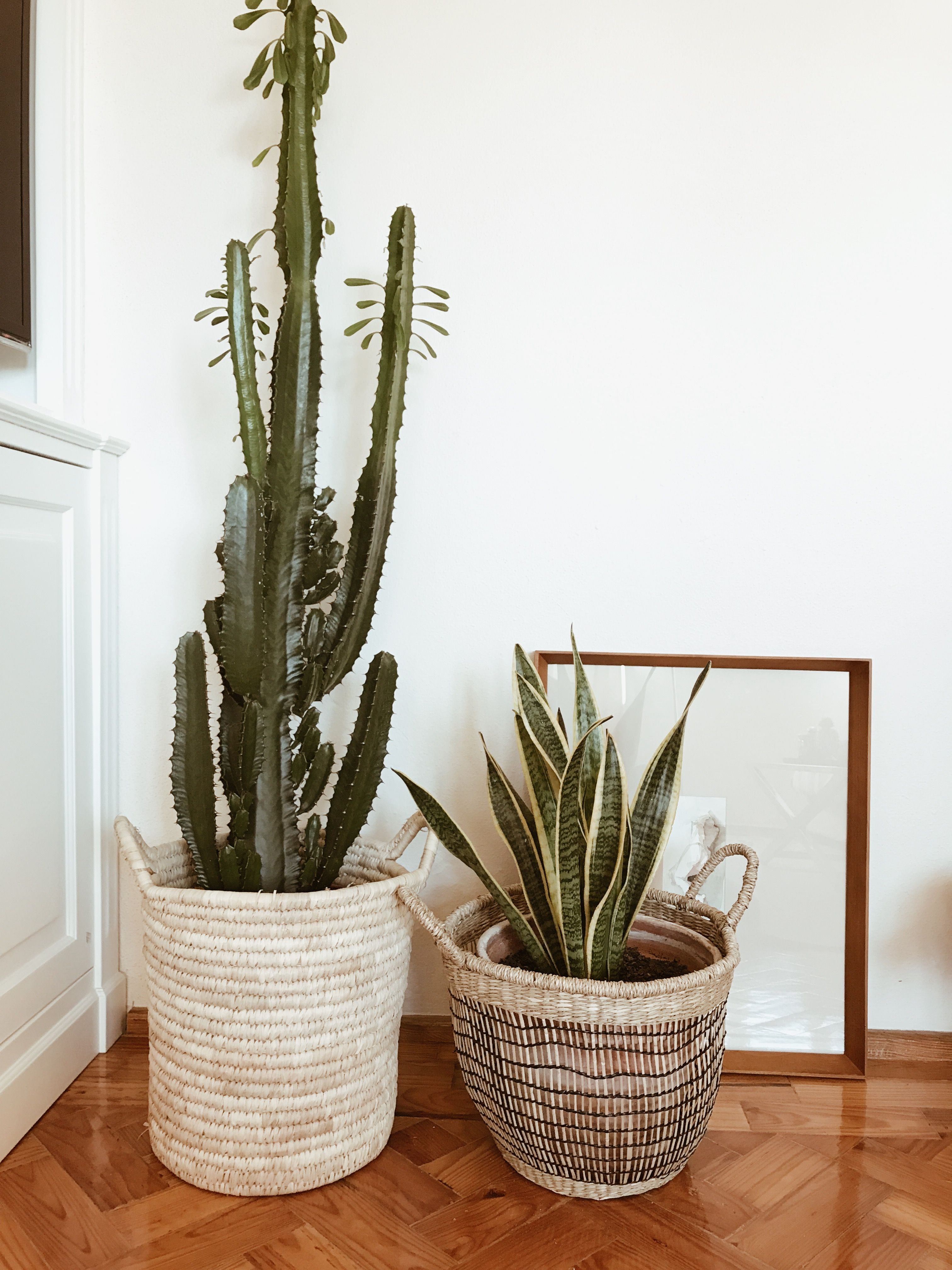 Indoor Plants  Home Decor