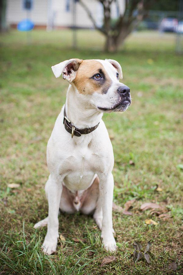 ©️️Dani Nicole Photography adoptable dogs Humane