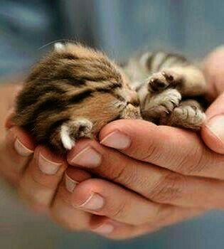 Pin By Esme Meow On Animals Cute Baby Animals Cute Animals Kittens Cutest