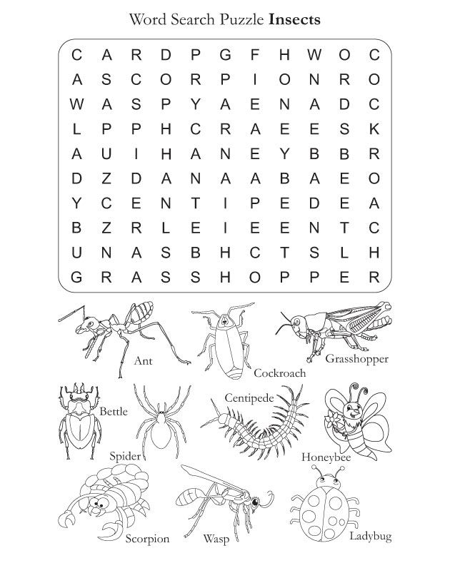 Word Search Puzzle Insects