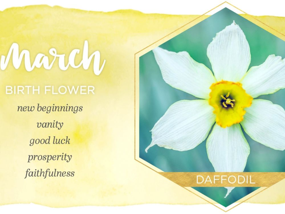 Flowers Of The Month Daffodils In March March Birth Flowers Birth Month Flowers Birth Flowers