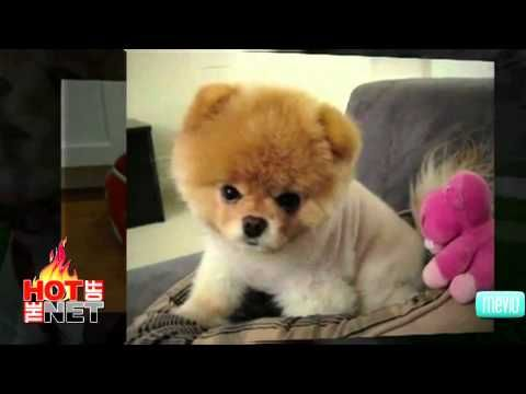 Cutest Dog Videos On Youtube Funny Video S Pinterest Cute