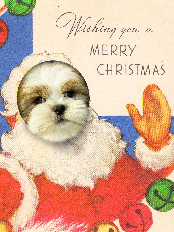 Great Idea | Christmas Vintage-Dogs | Pinterest | Shih tzu ...