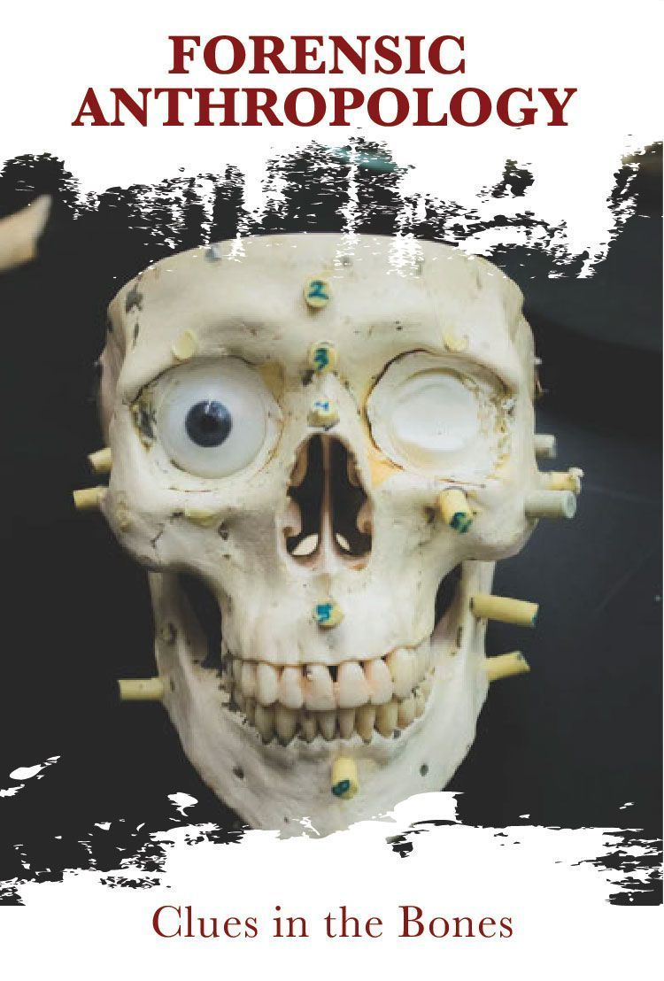 Forensic Anthropology Clues in the Bones Forensic