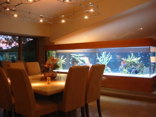 Un acuario en casa ooo peceras ooo home aquarium fish - Acuario en casa ...