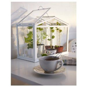 An IKEA Tabletop Greenhouse For Under $50.00. Who Knew? I Like It, Could