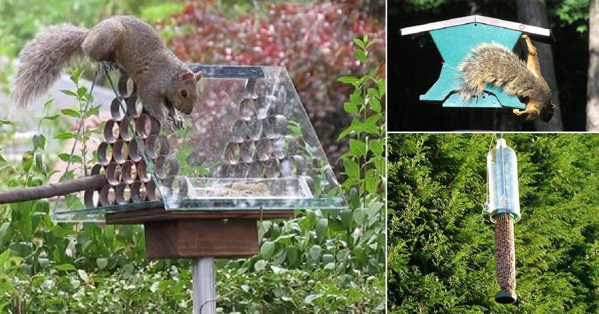8 Diy Squirrel Proof Bird Feeder Ideas Squirrel Proof Bird Feeders Bird Feeders Homemade Bird Feeders
