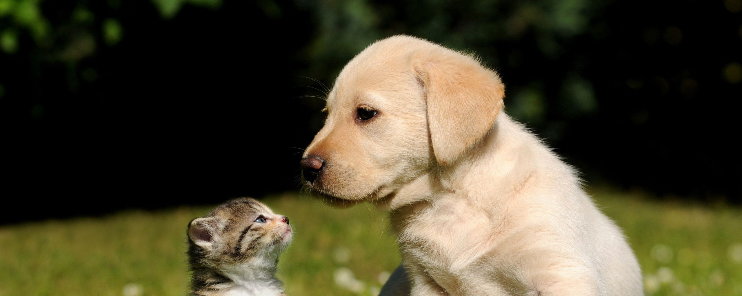 Pin by tom hasil on best friends pinterest dog and cat