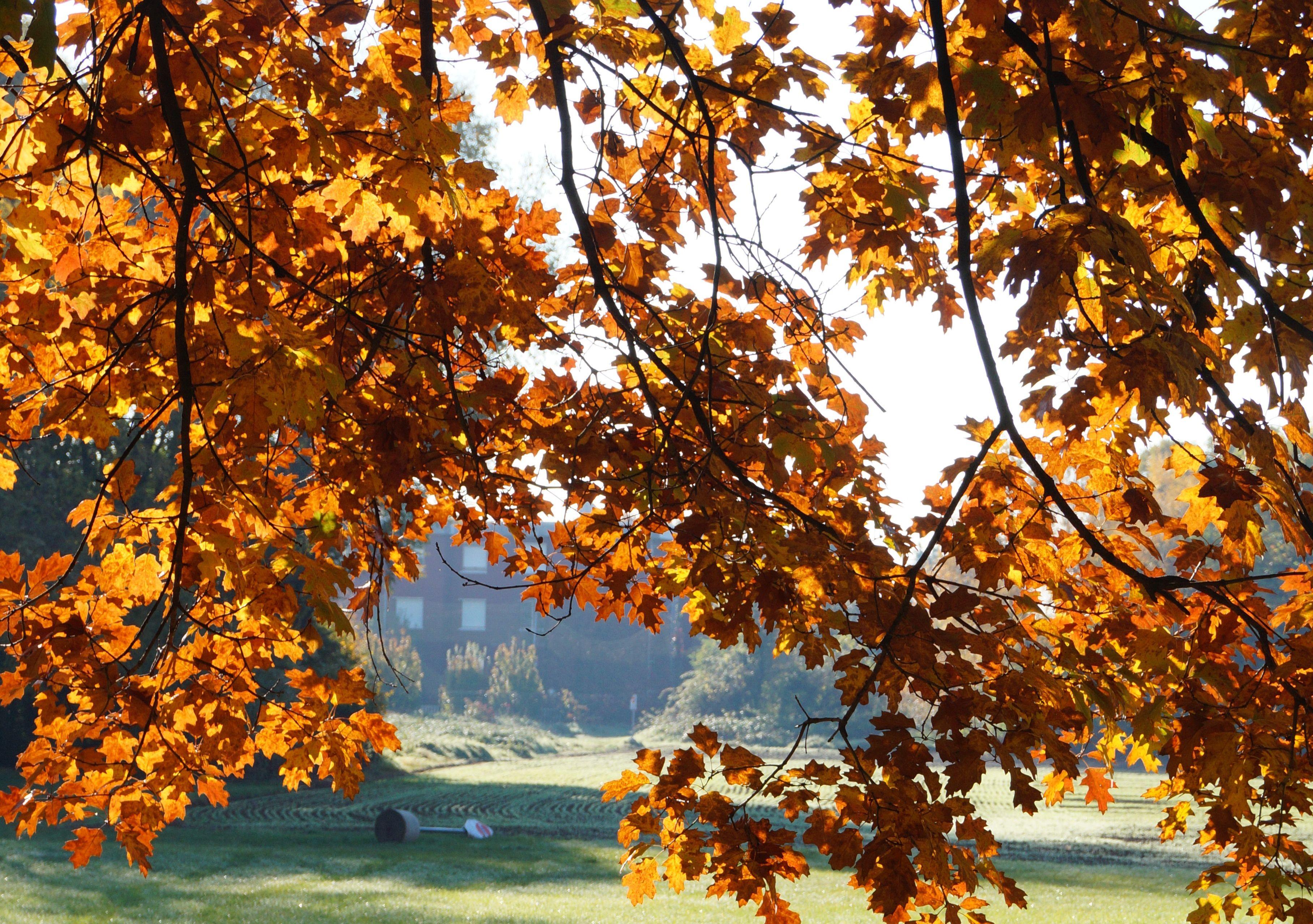 Autumn colours in Milano