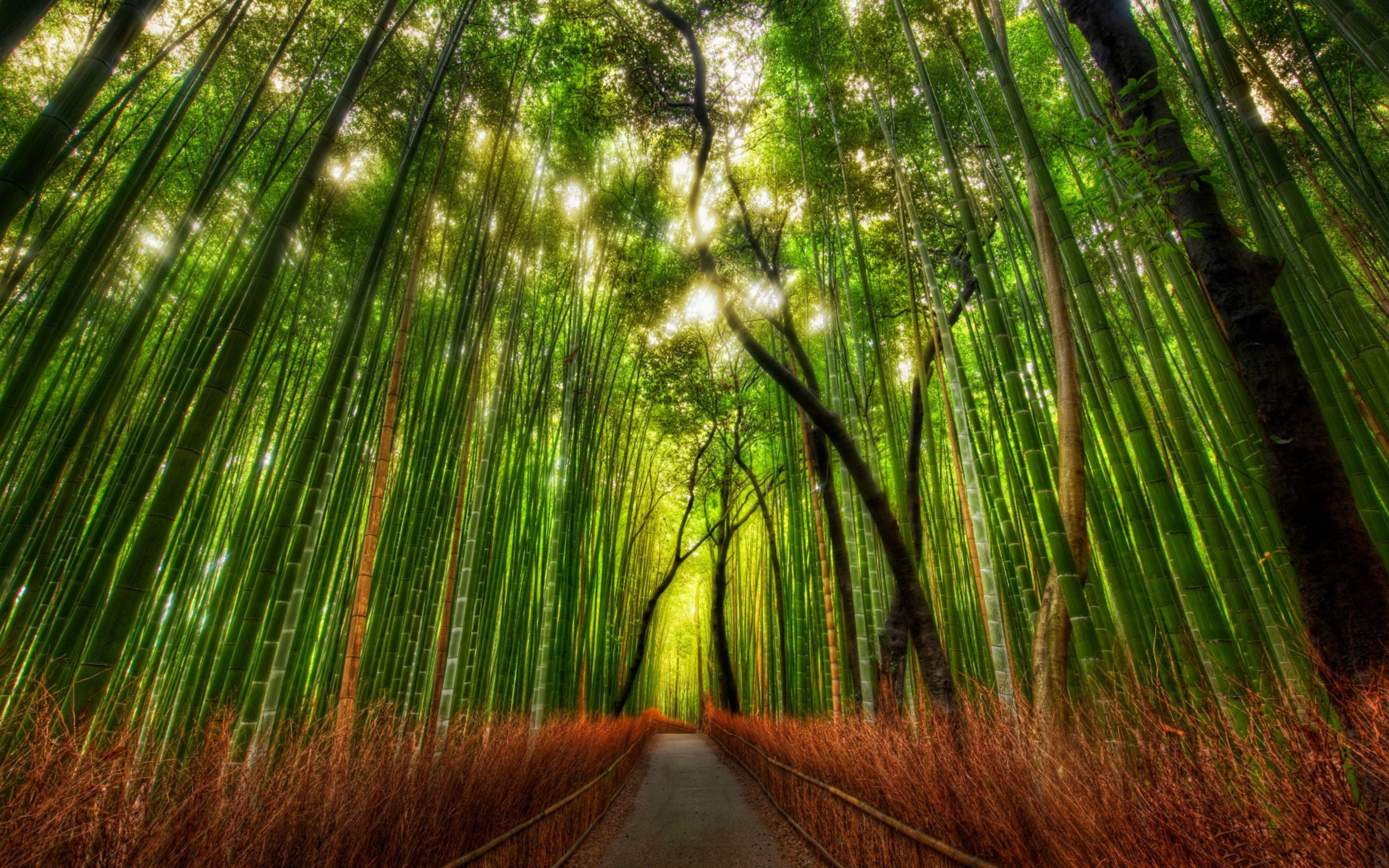 Wallpaper Download 5120x3200 Green And Red Bamboo Forest In The Sunlight Forests Wallpapers Nature Wall Bamboo Forest Japan Bamboo Forest Breathtaking Places