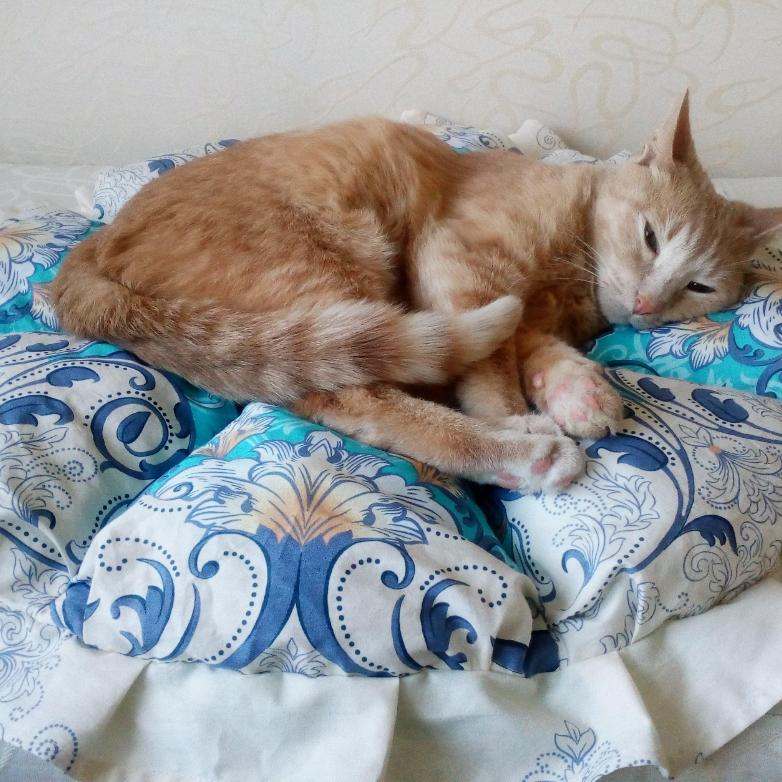 Cat Rug Cats Beds Round Cat Mat Kitten Beds Round Pillow Pet Etsy In 2020 Cat Rug Animal Pillows Kitten Beds