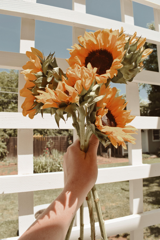 sunflowers, marla catherine edit, jaci marie   Sunflower ...