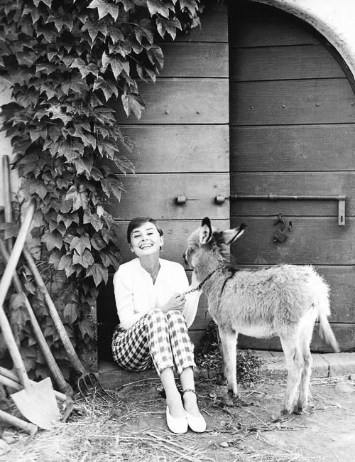 audrey and a donkey