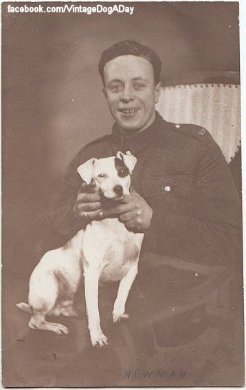 Original Vintage Real Photo Postcard Wwii Soldier And Jack Russell Terrier Dog Jack Russell Jack Russell Terrier Vintage Dog