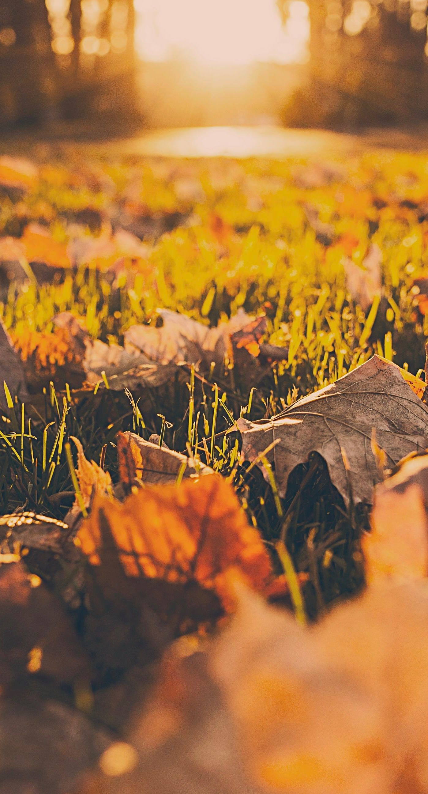 Landscape Dead Leaves Fall Blur Wallpaper Sc Iphone6splus Cute Fall Wallpaper Iphone Wallpaper Fall Fall Wallpaper