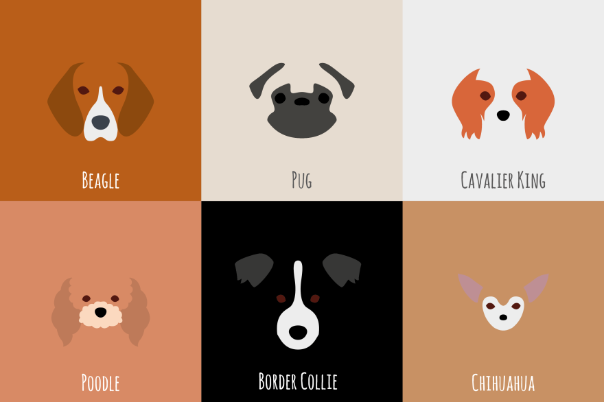 I Make Minimalist Illustrations Of Various Dog Breeds is part of I Make Minimalist Illustrations Of Various Dog Breeds Bored - My name is Laura Palumbo and I've always loved animals  One day I have been inspired by India, my sister's dog, thanks to the color of her coat, so I decided to illustrate the main dogs breeds through a minimalist style and with the use of negative space  My sister is studying Canine Education and I've always admired the passion and the enthusiasm whereby she studies dogs and their behavior  So I decided to combine business with pleasure, illustrating breeds of dogs trying to emphasize the difference between each of them, showing their colors and their shapes  I had to make a selection for a limited number of dogs to illustrate, but I enjoyed it a lot in shaping their faces and their features! Rottweiler is my favorite, and yours