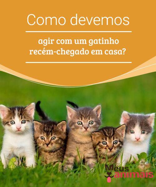 Como devemos agir com um gatinho recém-chegado em casa  Assim que se dê 9dfc773559