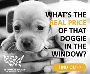 stop puppy mills - Take the pledge to help the Humane Society by rescuing dogs instead of buying from pet stores and breeders.  You may be supporting puppy mills and not even know it