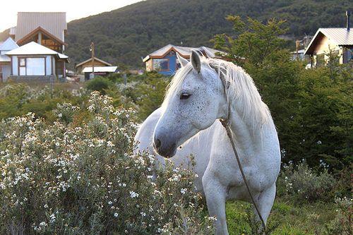 Ushuaia-062_02