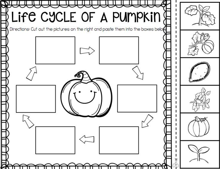 picture regarding Pumpkin Life Cycle Printable titled 610 easiest Education- Science pics upon Pinterest Schooling