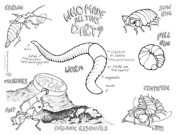 science earthworms coloring pages | who made the dirt coloring sheet | gardening | Pinterest ...