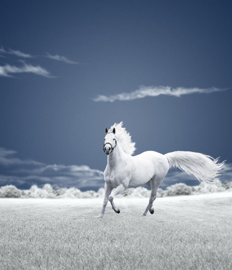White Beauty by Caras Ionut
