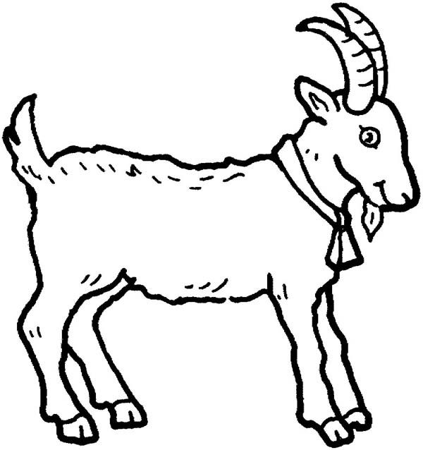 Picture of a Goat in Farm Animal Coloring Page  Kids Play Color