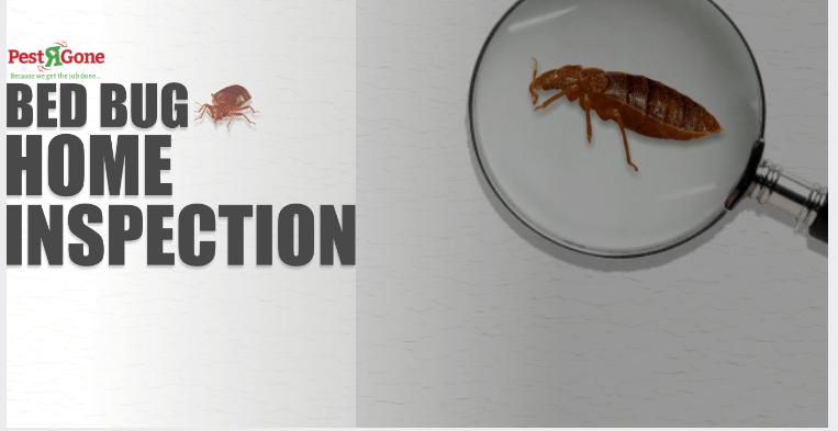 Pestrgone Offer Effective Bed Bug Control Services