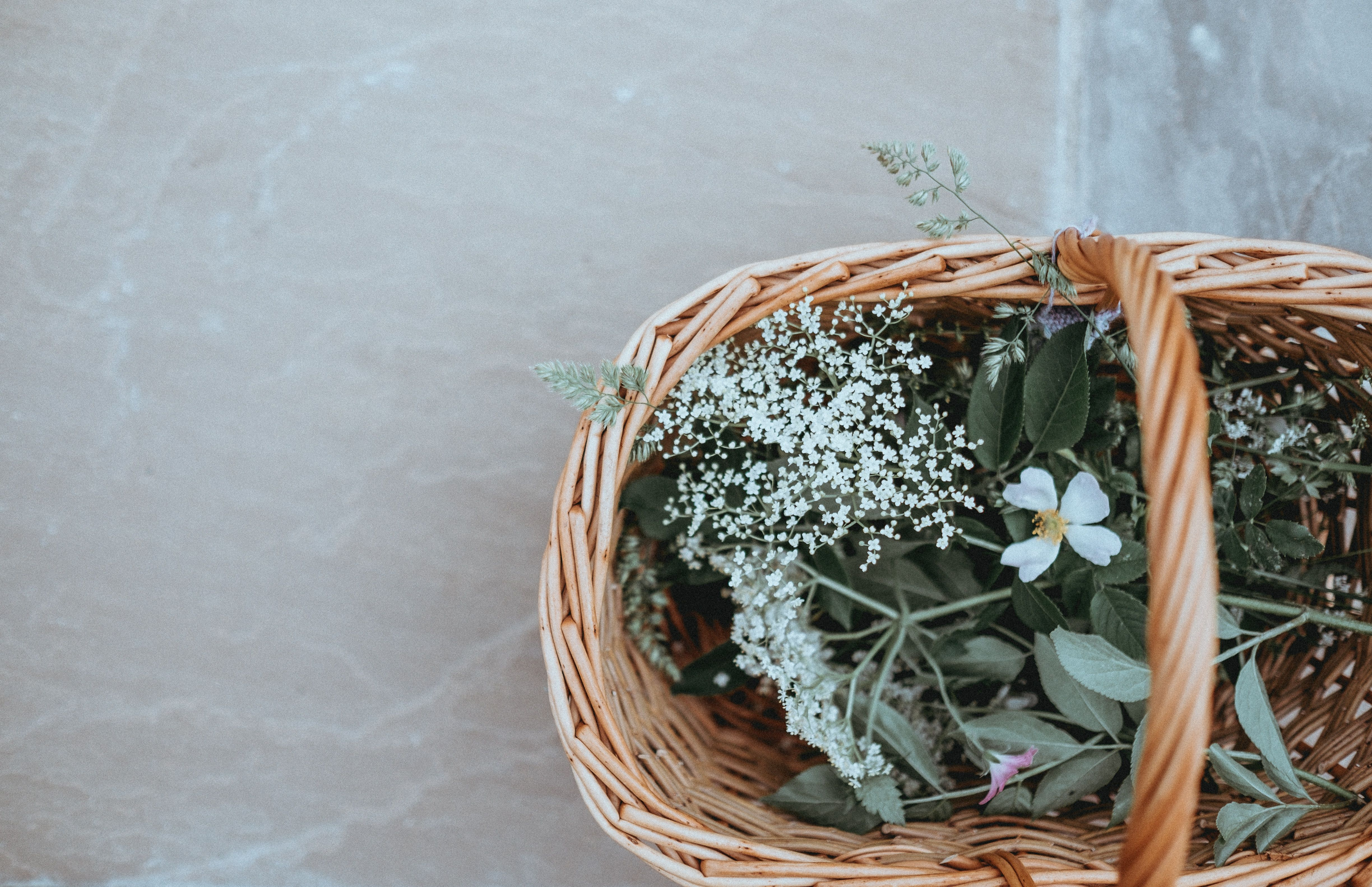 Basket flowers Grass (With images) Grass wallpaper