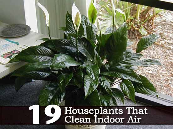 indoor plants nasa - photo #18