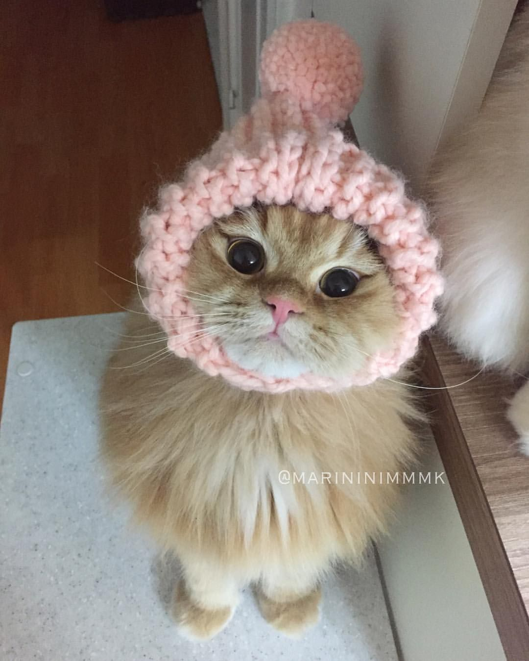Cat Costume For Cat Clothing In 2020 Diy Clothes For Cats Dog Clothes Diy Kitten Clothes