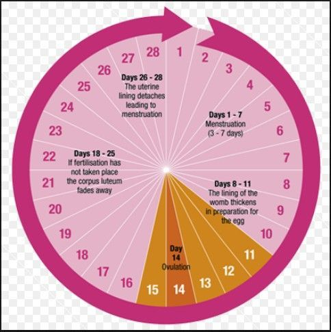 Menstrual cycle  what happens to your body in those days http also best the images health pregnancy rh pinterest