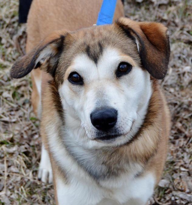 Adopt Gertie On With Images Animal Lover Dog Adoption Adoption